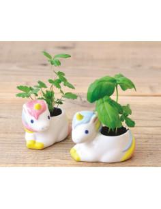 plante-a-faire-pousser-licorne