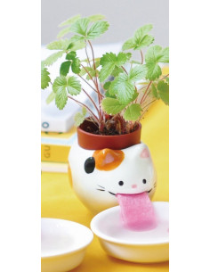 Plante à faire pousser fraise des bois Chat Peropon